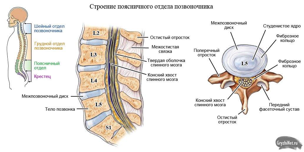 Что такое остеохондроз и как его лечить медикаментозно